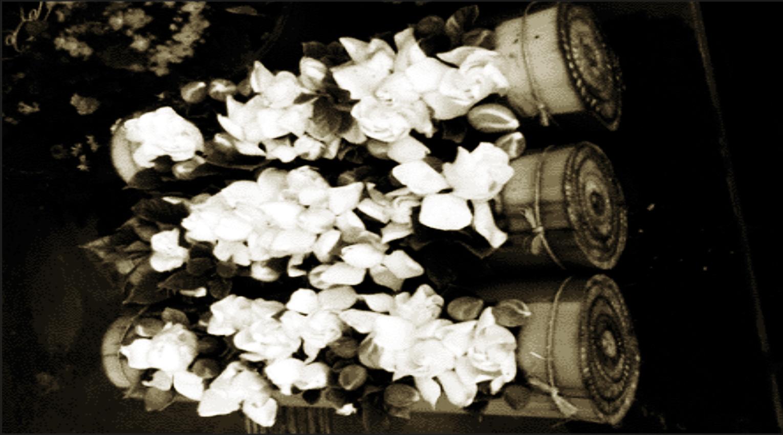 Producción y comercialización de la gardenia en Fortín de las Flores, en donde resaltan los tradicionales tubos de gardenia en tronco de plátano