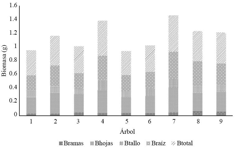 Biomasa (B) por componente en árboles de Leucaena esculenta