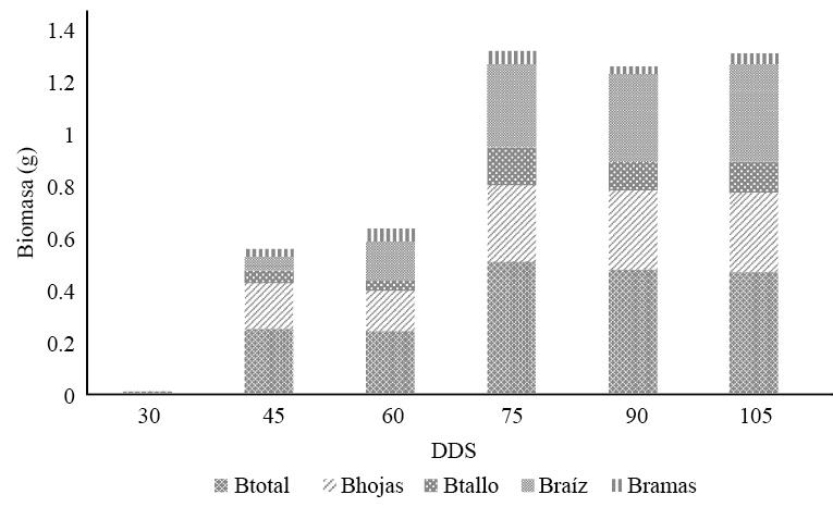 Biomasa (B) por componente de cada árbol y días después de su germinación (DDS)